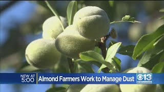 Almond Farmers Work To Manage Dust