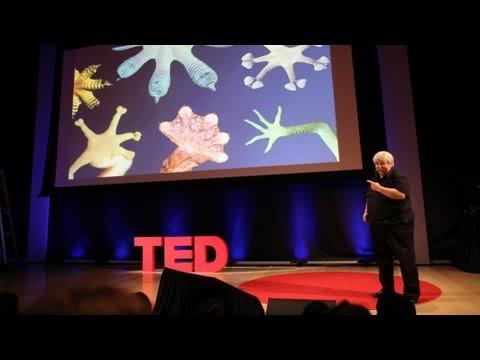 Curiosity, discovery and gecko feet - Robert Full - UCsooa4yRKGN_zEE8iknghZA
