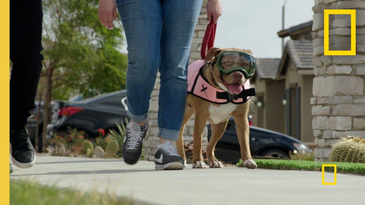 Calming an Overly Excitable Dog  | Cesar Millan: Better Human Better Dog