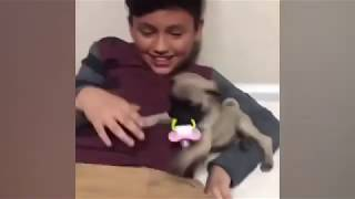 Crazy Animals Video Compilation - Funny & Cute #180