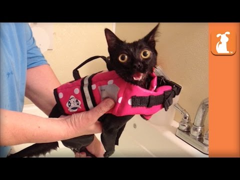 Paralyzed Kitten Given Second Chance With Wheelchair Gets Adopted - UCPIvT-zcQl2H0vabdXJGcpg