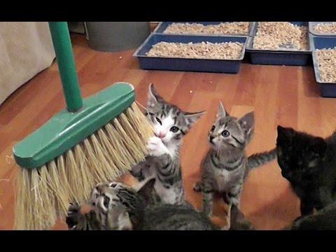 Cleaning With Cute Kittens - UCRGjMLJOdB3PBqQpO-KJZjQ