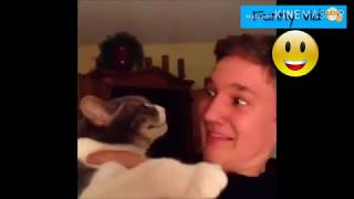 Funny Cats Fails and funny moments Like funny vid