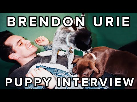 The Puppy Interview With Brendon Urie Of Panic! At The Disco - UCPRUgAl_MV9PajsrG_BmT9w