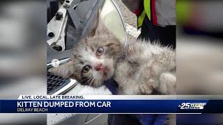 Kitten dumped from car