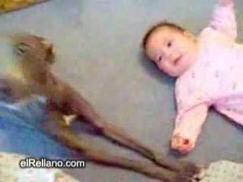 Dog vs Baby Funny Clip