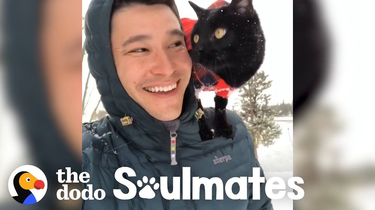 Cat And His Dad Go Backpacking Together | The Dodo Soulmates