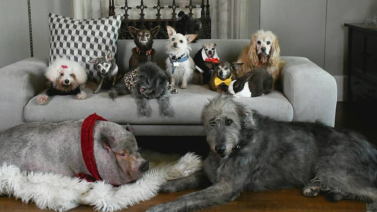 This Guy Can't Stop Rescuing Senior Dogs  | The Dodo