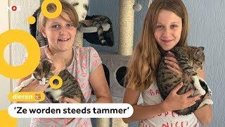 Asielen zitten overvol, kittens logeren bij gastgezinnen
