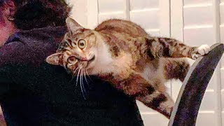 ? Funniest ? Cats and ? Dogs - Awesome Funny Animals Life Video ?
