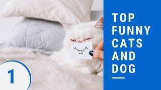 Top funny cats and dog Part 1 - ?best funny cat and dog videos ever 2019?