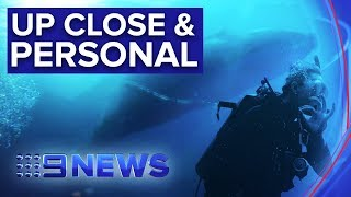 The new experience enabling you to swim with whales off NSW Coast | Nine News Australia