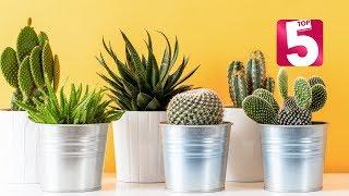 Top five plants to grow indoors in Qatar