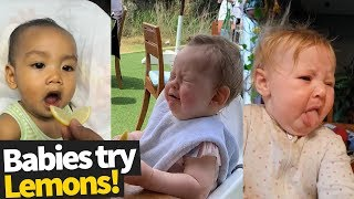 Babies Eating Lemons for the First Time Compilation (2019)