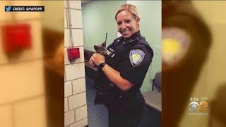 Kitten Rescued Near George Washington Bridge