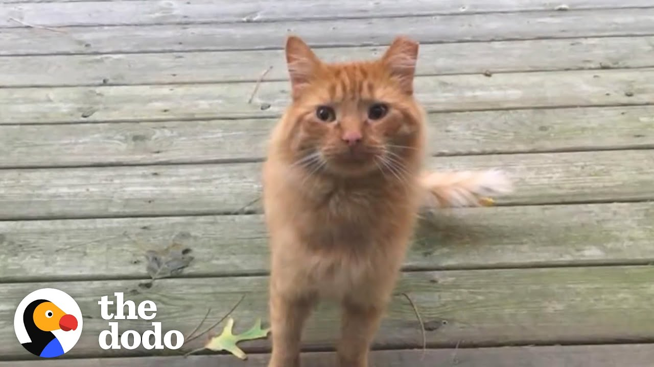Guy Tries To Befriend A Stray Cat For Over A Year | The Dodo