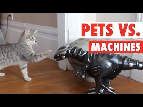 Pets vs Machines - UCPIvT-zcQl2H0vabdXJGcpg