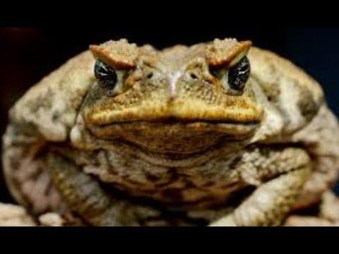 Breaking Huge Toxic Toads Tears Up Florida / Prophecy / Paul Begley / Apocalyptic