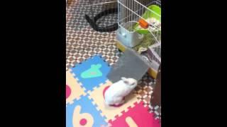 海星跳兔子舞