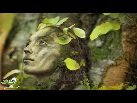 8 Hours of Relaxing Celtic Music: Meditation Music, Beautiful Relaxing Music ★91 - UCjzHeG1KWoonmf9d5KBvSiw