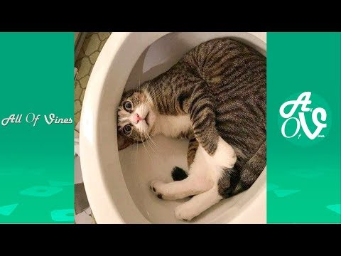 Try Not To Laugh Watching Funny Animals Compilation | Funniest Animals Vines 2019 - UCrBYTP-sa4dtOjMWEBfR_Ng