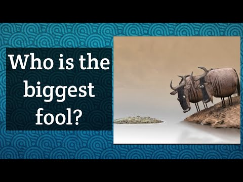 Who is the biggest fool?