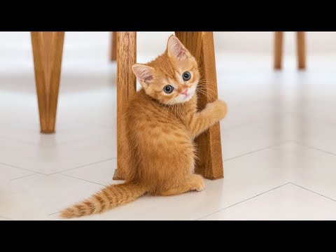 ♥Cute Cats and Kittens Doing Funny Things 2018♥ #3 - Funny Cat compilation - UCq5hgY37WAryZCwmehDyCaQ