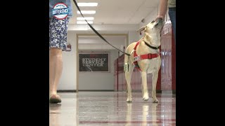 Shelby the therapy dog serves as stress reliever for students at JCPS high school