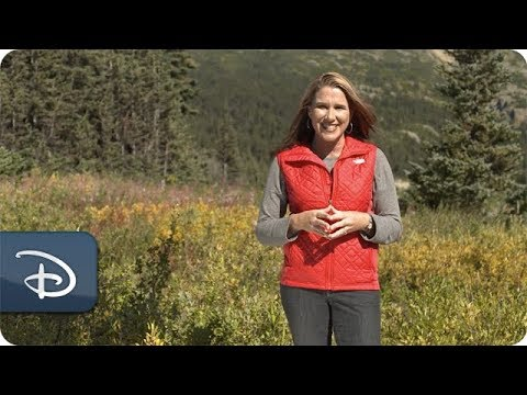 A Mom's Take: Wilderness & Wildlife Adventures in Alaska | Disney Cruise Line - UC1xwwLwm6WSMbUn_Tp597hQ