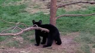 Crazy Animals Video Compilation - Funny & Cute #184
