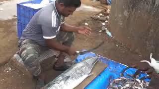 Live Fish cutting skills // Fish market in India | fusherman
