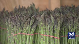 Frequent wet, cold spring weather delaying asparagus season