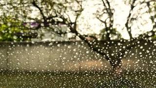 Rainy Summer Evening Drive to Southfield, Michigan from Berkley, Michigan