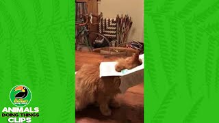 Cat with a Box Stuck on its Head | Animals Doing Things Clips
