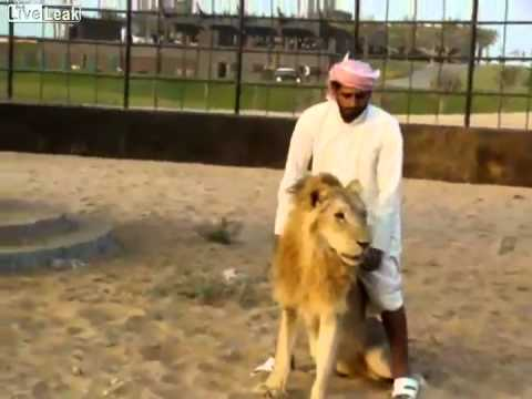 Ride The Lion ! Crazy arab guy !!!