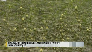 Cannabis career fair and symposium coming to Albuquerque