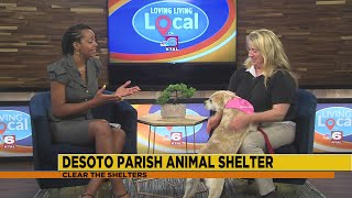 Adopt a pet from the Desoto Parish Animal Shelter