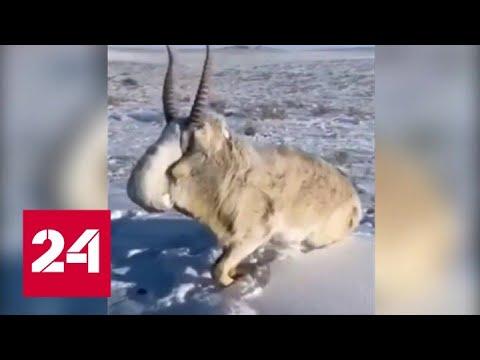 Сибирские морозы бьют рекорды