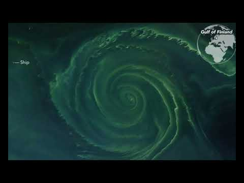 Mysterious Algae Bloom Whirlpool In the Baltic Sea Is So Big It Could Cover Manhattan