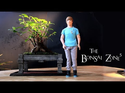 My Bonsai Forest and My Ginseng Ficus, Part 4, April 2018