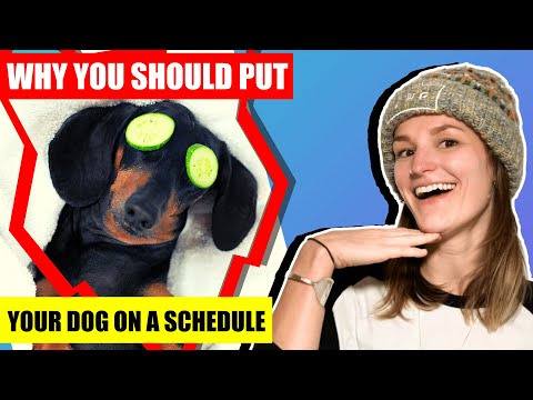 Why You SHOULD Put Your Dog On A Schedule