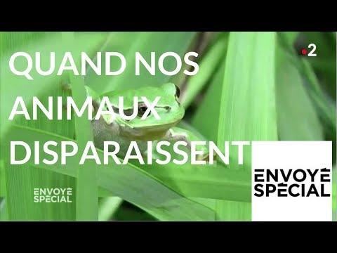 nouvel ordre mondial | Envoyé spécial. Quand nos animaux disparaissent… - 3 mai 2018 (France2)