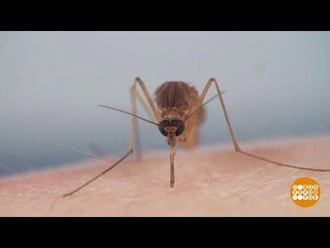 Если укусил комар... Доброе утро. Фрагмент выпуска от 25.06.2021