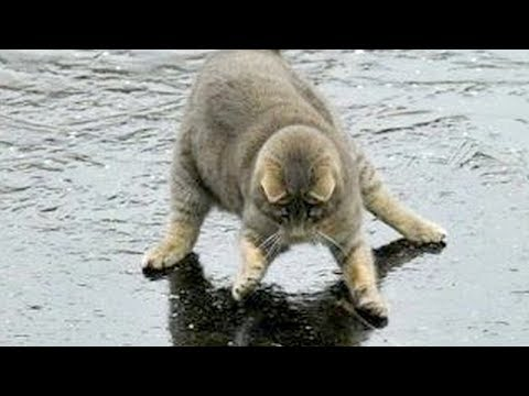 You will LAUGH SO HARD that YOU WILL FAINT - FUNNY CAT compilation - UC9obdDRxQkmn_4YpcBMTYLw
