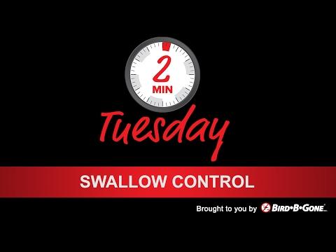 Swallow Bird Control