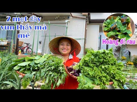 Trồng rau kim cương,rau kaga,hái dâu chấm sữa-thu hoạch 5 loại rau đậu,đầy vun 2 mẹt thấy mà mê #894