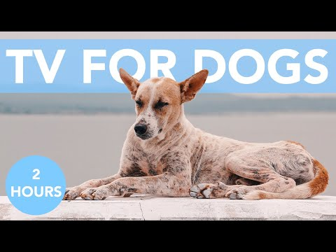 RELAXING DOG TV! Entertainment for Bored dogs with Relaxing Music!