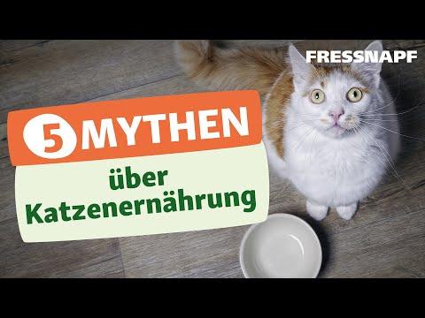 Top 5 Ernährungsmythen bei der Katze