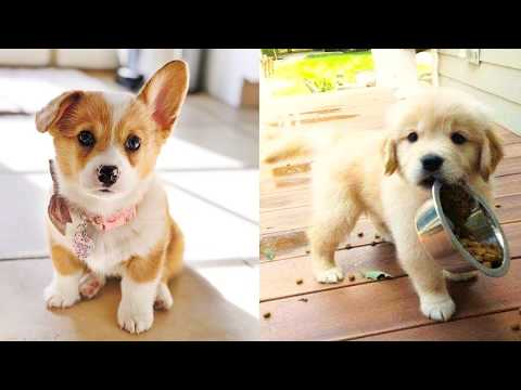 Baby Dogs - Cute and Funny Dog Videos Compilation #25   Aww Animals - UC8hC-augAnujJeprhjI0YkA