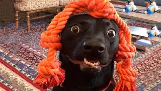 ? Funniest ? Dogs And ?Cats - Funny Pet Animals' Life ?